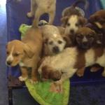 Bundle of puppies at Ponca City Humane Society (OK)