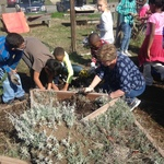 Students planting