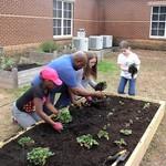 Students planting vegetables