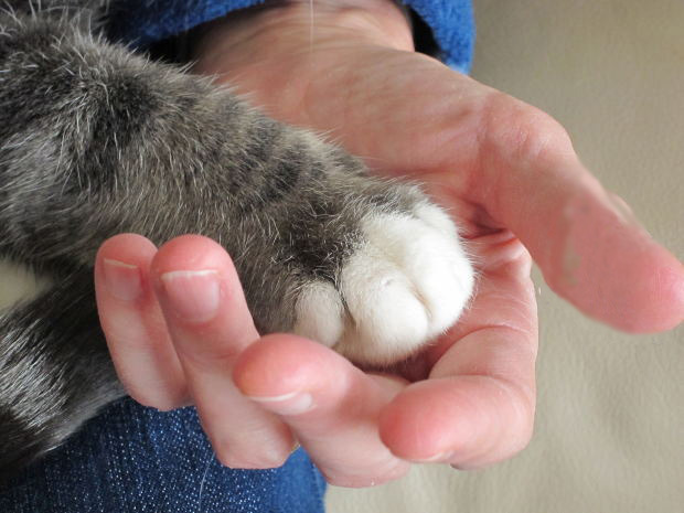 free paw in hand no bandaid.jpg