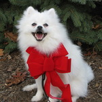 Lills_pup