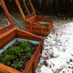 Cold Frame Love