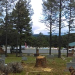80ft_tree_taken_down_in_a_cemetary