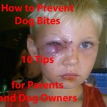 How to Prevent Dog Bites for Parents and Dog Owners