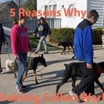 5 Reasons Why Training Collars Work