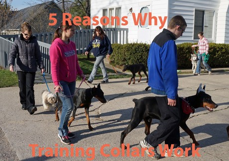 5_Reasons_Why_Training_Collars_Work.jpg