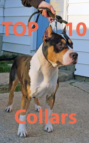 Top_10_Dog_Collars_copy.jpg