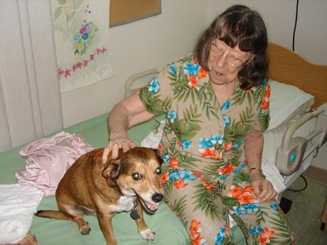 Michigan_Pet_Therapy_Dog.JPG