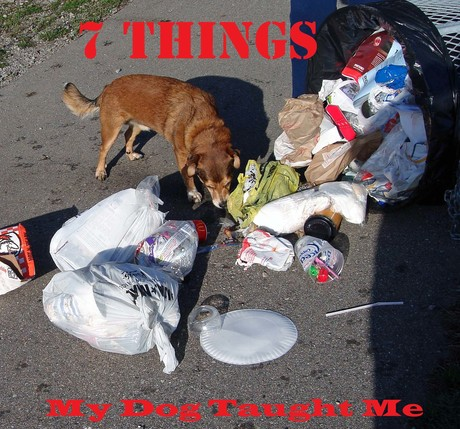 7_Things_My_Dog_Taught_Me.jpg