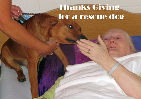 Thanksgiving_Rescue_Dog.jpg