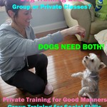 Dog Training--Private or Group Classes?