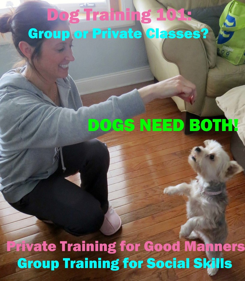 Dog Training--Private or Group Classes? - Lisa Freeman