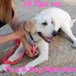 10 Tips for Good Manners in Dogs