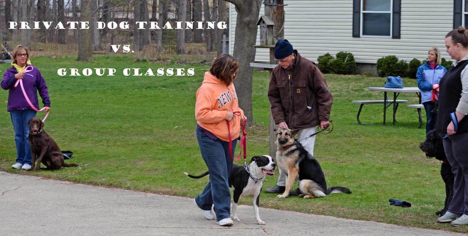 Top Dog Trainer in Michigan Lisa Freeman