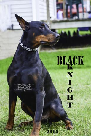 Dsc_8881-black_knight_b