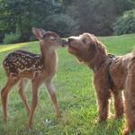 Gabby_deer