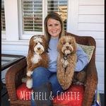 Cosette- Petite Australian Labradoodle