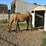 Some Thoughts on Horse Rescue