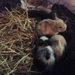 Gwinnett Bunnies