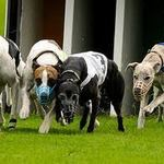 Awesome Hounds!