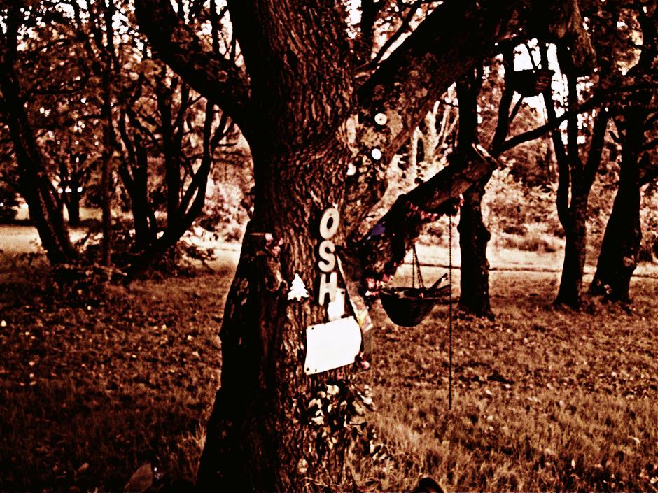 Undisclosed Location - Joshes Tree - Hampshire - UK