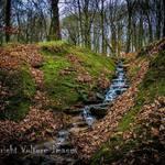 Lady_wood_stream