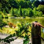 Lady_wood_lakes