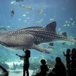 Georgia-aquarium-woe3-690x458