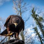 Photos from guests on our hawkwalks or other experience days