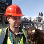 Bird control on an important project.