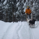 Winter Sled Tours