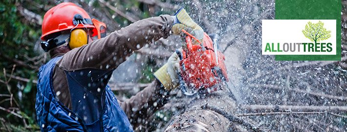 Know What to Do Before Hiring Expert Tree Removal Adelaide Company