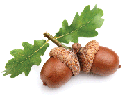 ph-acorns-hoddrses.png