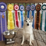 Kaiser wins NADAC Championships!