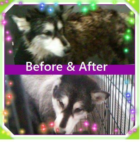 Home what a mess professional dog grooming powered by doodlekit dolly solutioingenieria Image collections