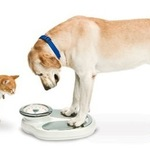 Diabetes and Your Pet