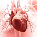 ​Defibrillateurs Be The Most Wanted Libarators For Heart Patients
