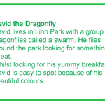 Dragonfly-text1