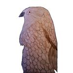 Hawk-drawing