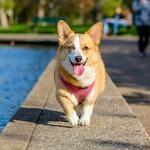 Hi Visibility Dog Products