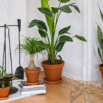 ​Have Plants Delivered to Your Home
