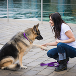 ​Tips on How to Train Your Dog