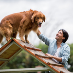 Professional Dog Training: The Benefits