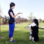 ​Tips about Dog Training