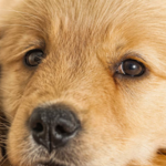​A Guide to Buying a Pet Dog