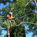 ​Importance Of Having A Tree Service