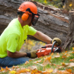 ​The Relevance Of Tree Services