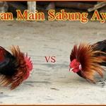Aturan Main Dalam Judi Online Sabung Ayam