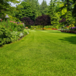 ​Choosing a Professional Landscaping Company