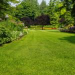 Choosing a Professional Landscaping Company